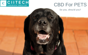UK CBD for Pets CBD for Dogs