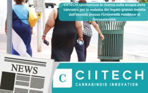 CIITECH sponsorizza la ricerca sulla terapia della cannabis per la malattia del fegato grasso indotta dall'obesità presso l'Università Hewbrew di Gerusalemme.