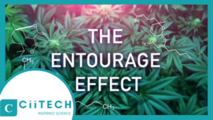 CBD Entourage Effect, CBD Terpenes Explained